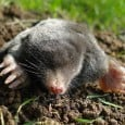 It is National Mole Day!  Sorry cute (?), burrowing creature, it isn't your day. National Mole Day is celebrated by chemists and chemistry students on October 23rd. The mole is honored between […]