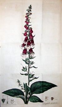 Withering, William (1741-1799). An Account of the foxglove, and some of its medical uses, Birmingham, 1785.