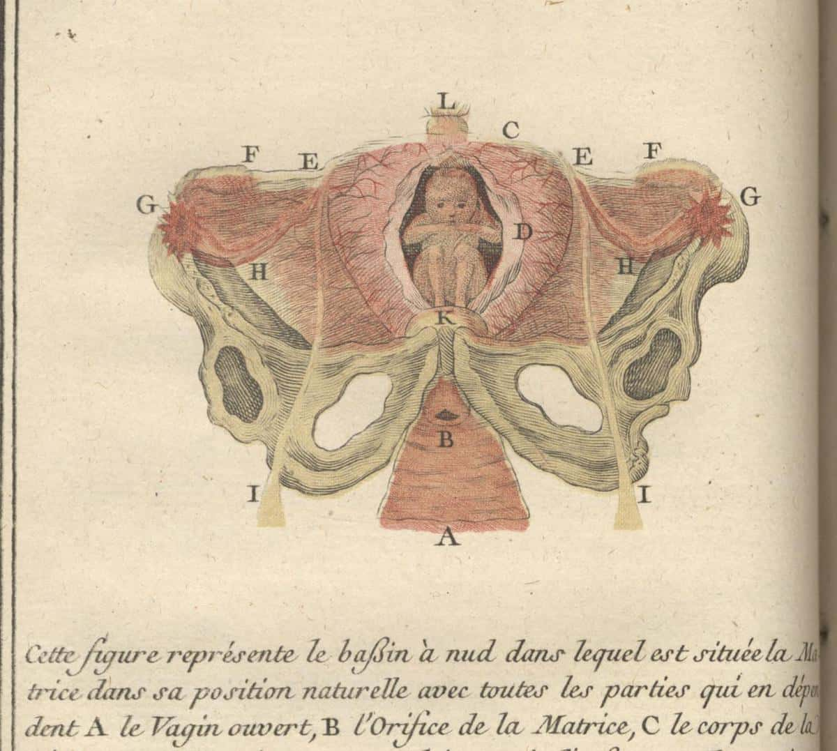 Le Boursier, a prominent Parisian midwife, first published the present work in 1759 without illustrations. The success of the book encouraged her to have later editions illustrated by Jean Robert […]