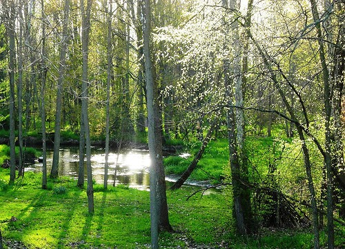 image of woods in Spring