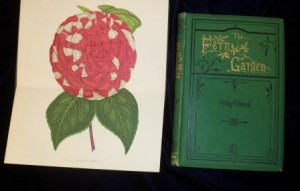 Fern book cover and flower illustration