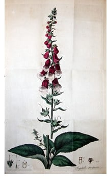 A Withering Glance at Foxglove Withering, William (1741-1799). An Account of the foxglove, and some of its medical uses, Birmingham, 1785. William Withering was a keen observer of plants and […]
