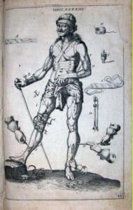 scultetus-43101.jpg