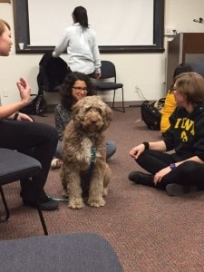 therapy dogs 3