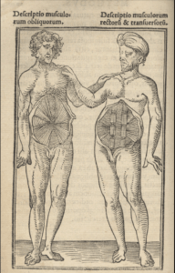 picture from anatomy book