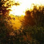 picture of sunset with plants