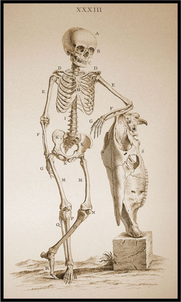Image of skeleton resting arm