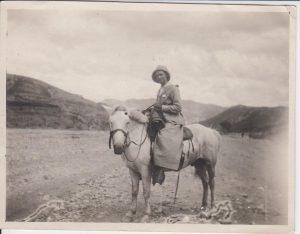 horses 1917