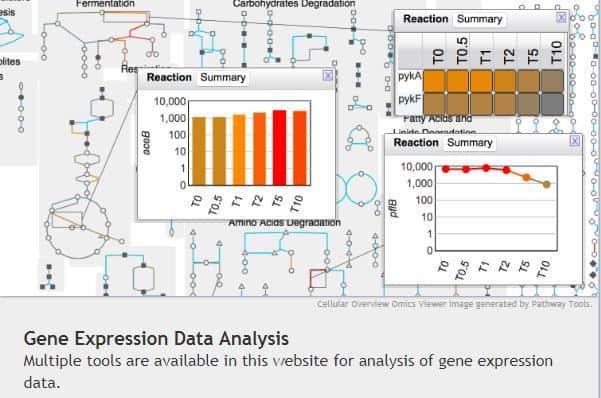 screen shot from biocyc