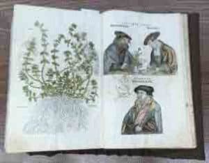 photo of herbal from 1541; herb and 3 men