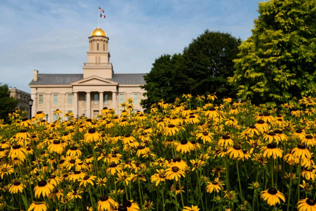 black eyed susan flowers in front of old capital building