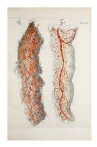 image of vascular system