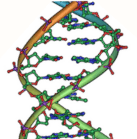 Image of double helical DNA strands