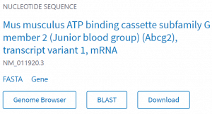 Search result for Mus musculus Abcg2 transcript