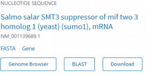 Search result for Salmo salar SUMO1 mRNA