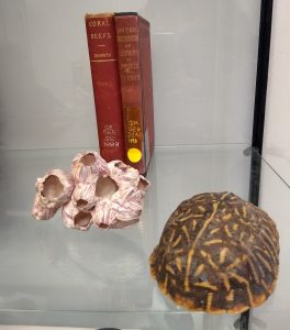Image of coral and tortoise shell