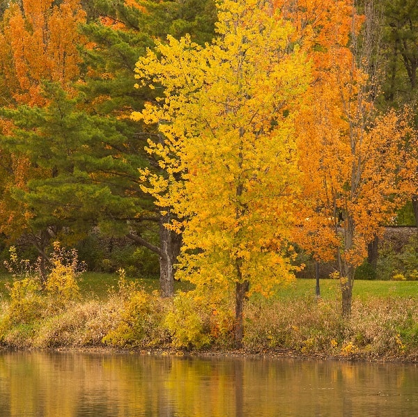 Image of trees along the Iowa River