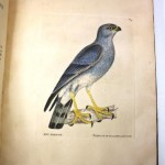 Printed book illustration of a blue bird that is hand painted