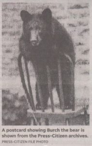 Press Citizen's picture of Burch the Bear on a chair