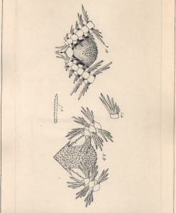 Plate XIII.